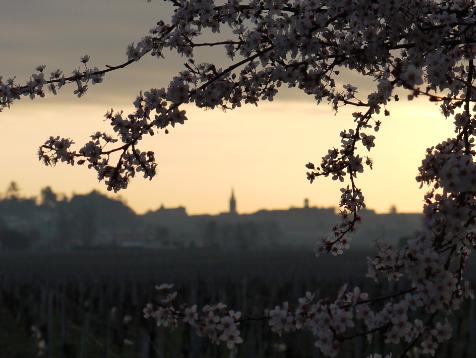 Cantenac Vigne et St Emilion
